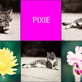 Collage Pixie